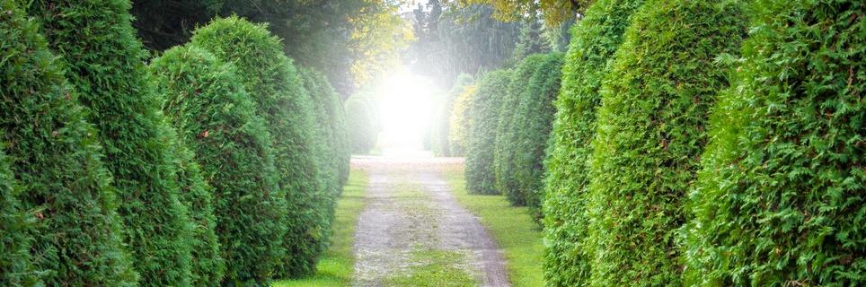 Ustanowienie drogi koniecznej nasąsiednim gruncie