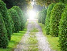 Ustanowienie drogi koniecznej na sąsiednim gruncie